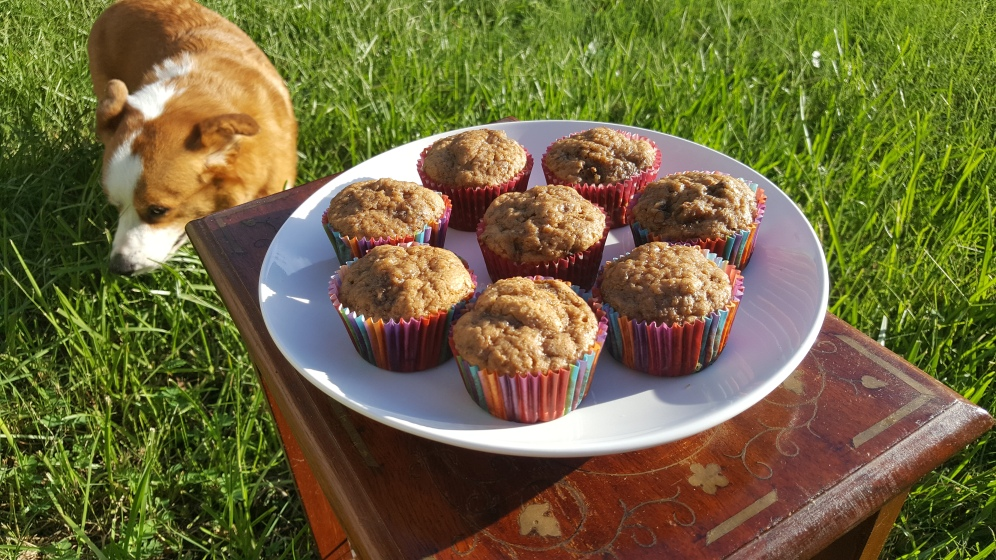 Ear Grey Banana Muffins with a Corgi in the shot